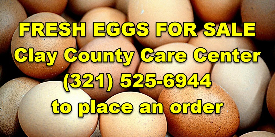 Fresh Eggs For Sale